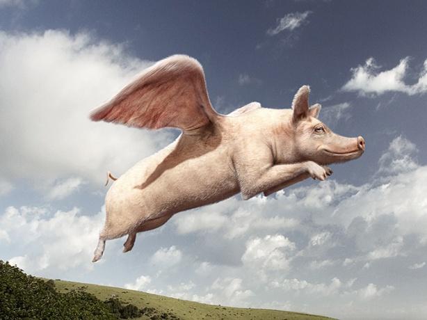 gk324_flying-pig-rgb-final_lr_web