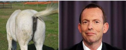 A donkey's ass and Tony Abbott - Can you spot the difference?